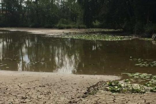 """Heißer Sommer mahnt: """"Sparsam mit Grundwasser umgehen"""""""